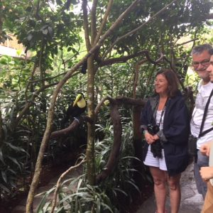 You can feed the Toucans, they are very well behaved